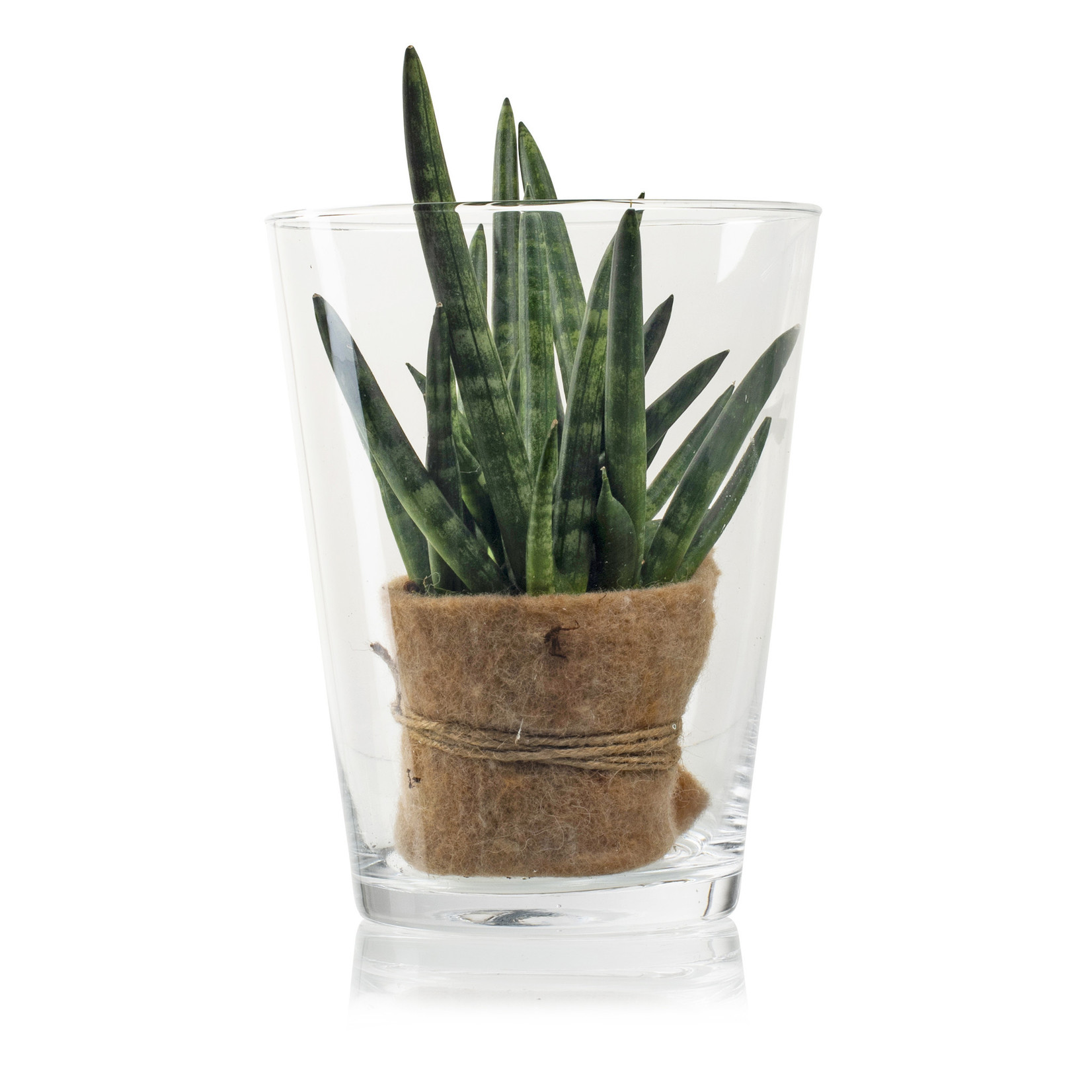 Jodeco Glass Glazen vaas 'Geva' H24 D18,5 cm Transparant