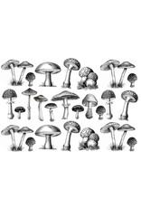 Sanbao Mushroom