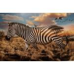 Hoffman Fabrics Call of the Wild - Zebra - Panel