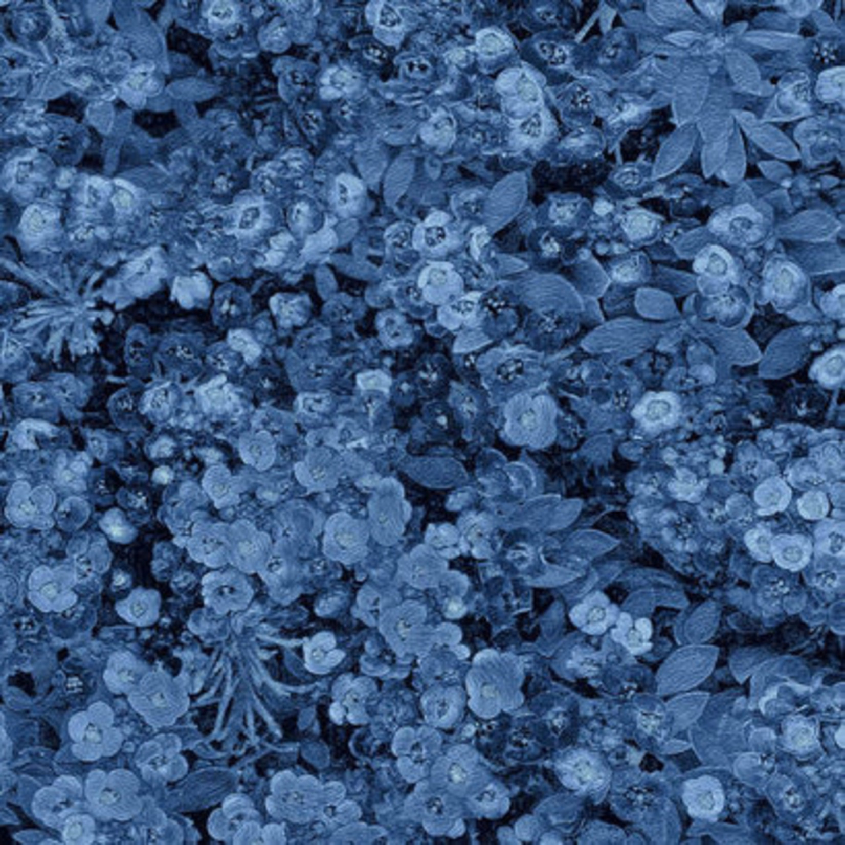 Blank Quilting Once In A Blue Mood - Lacy Floral - Dark Blue