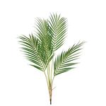 Grand Illusions Parlour Palm h84cm