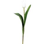 Grand Illusions Tulip h36cm