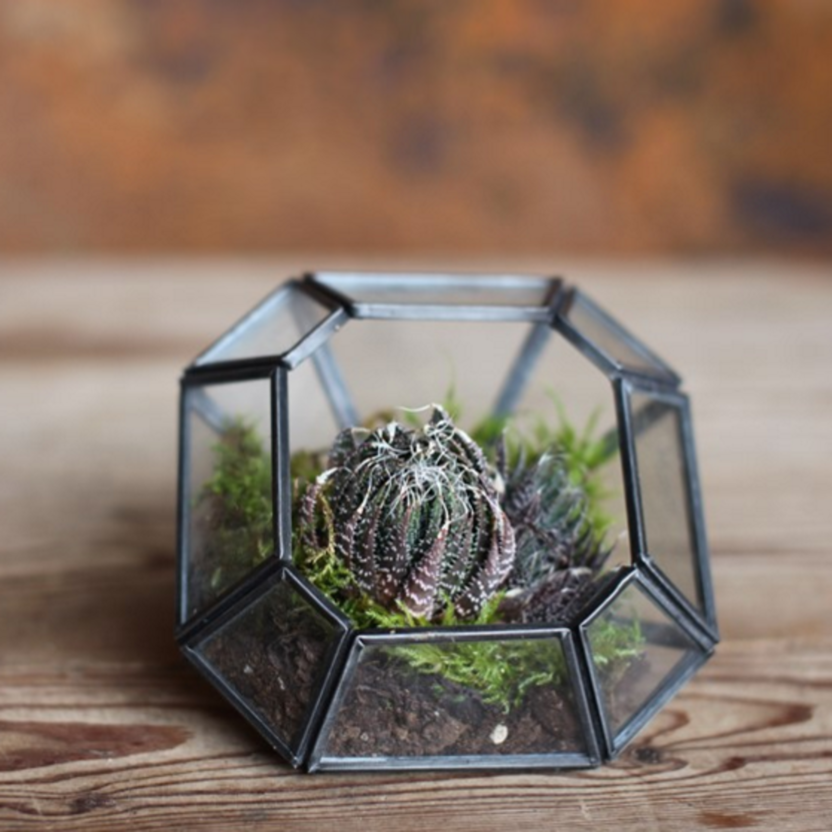 Nkuku Aketa glass Planter Zinc Large Square Terrarium