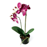 Grand Illusions Orchid in Pot Dark Pink H45cm