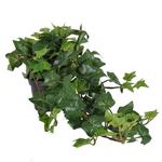 Grand Interiors Trailing Ivy in Pot 60cm