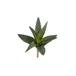 Grand Illusions Aloe Plant 25cm