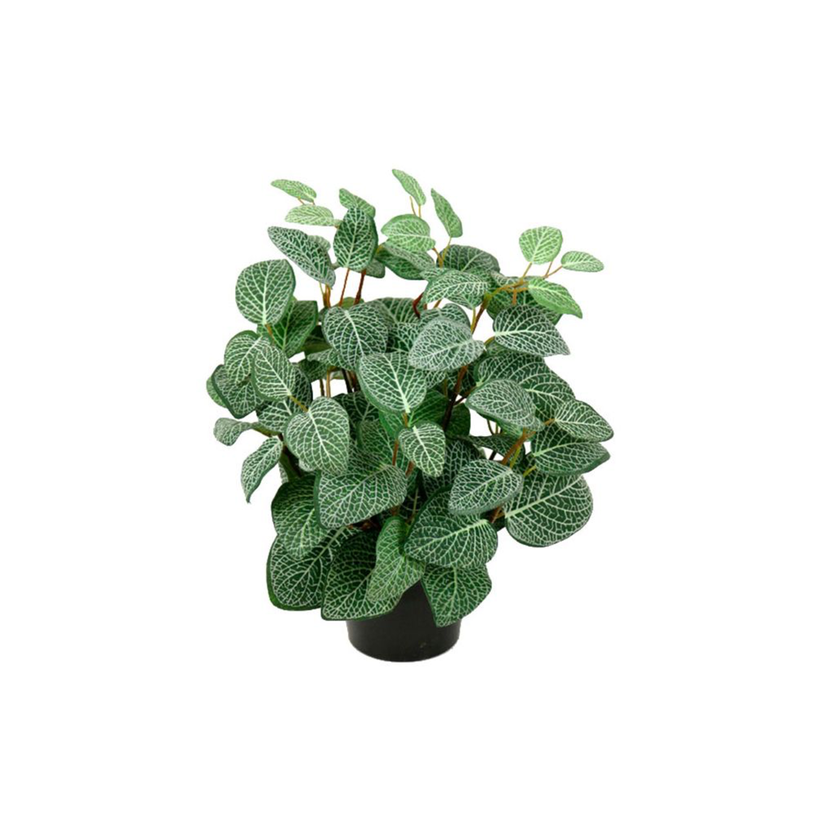 Grand Interiors Fittonia Artificial Plant H 34cm W 25cm 10cm Pot