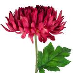 Grand Illusions Chrysanthemum Dark Pink 74cm