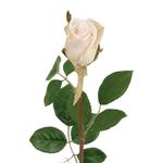 Grand Illusions Rose Cream h50cm
