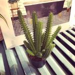 Grand Illusions Succulent Cactus