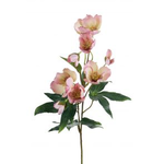Grand Illusions Hellebore Pink 57cm