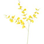 Grand Interiors Onicidium Yellow