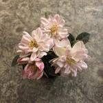 Grand Interiors Mini Wild Rose in Pot