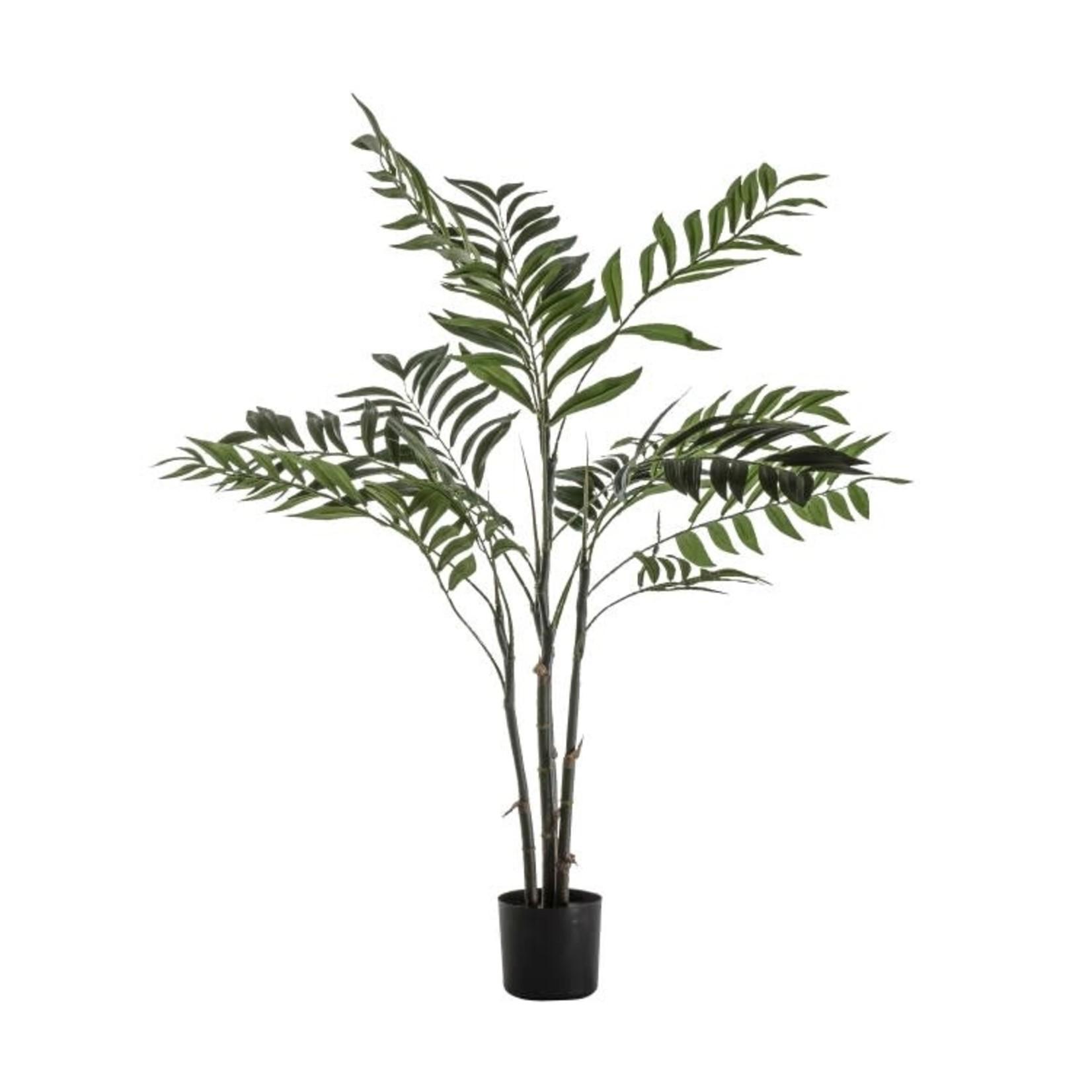 GD Areca Palm Tree Small