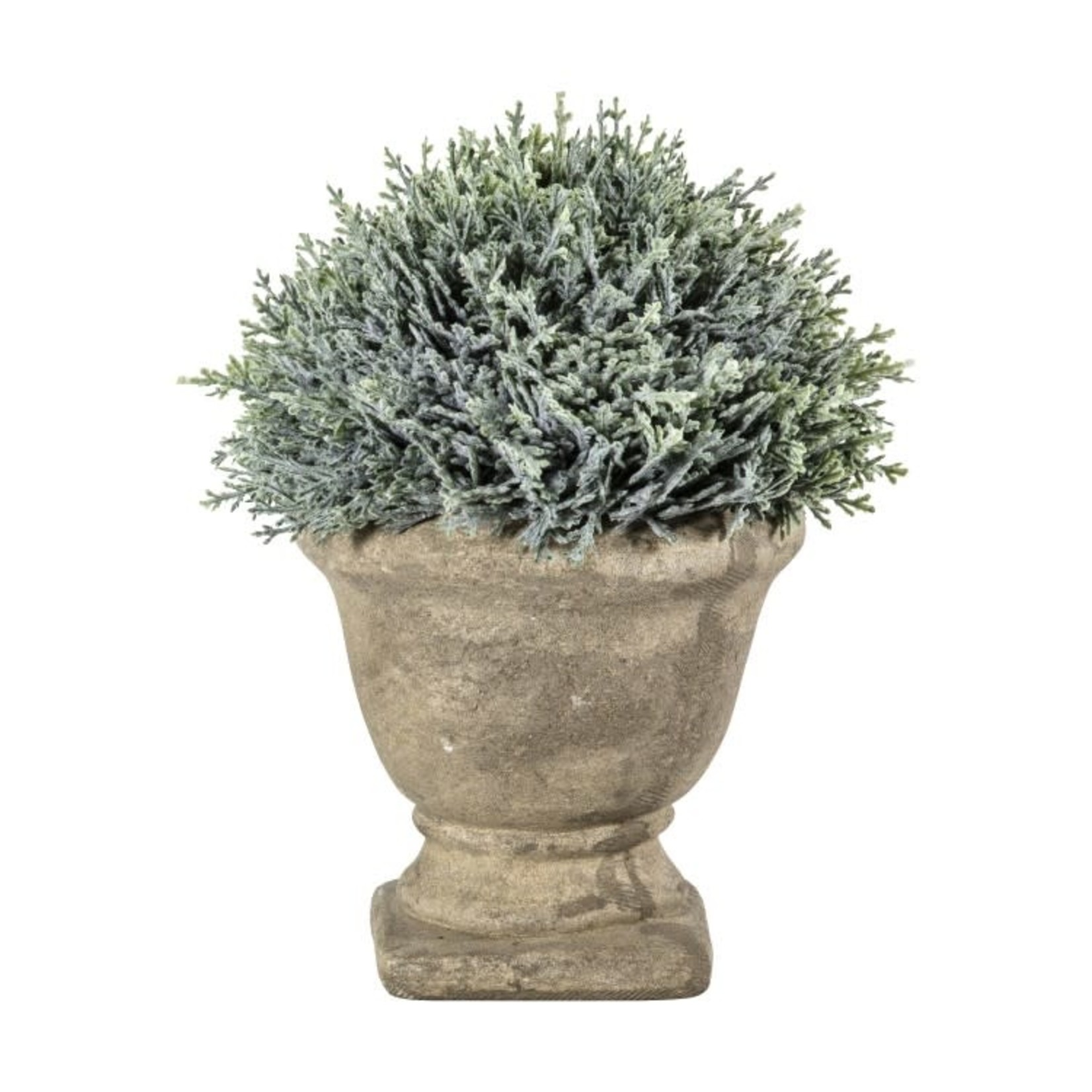 GD Cypress with Stone Effect Urn