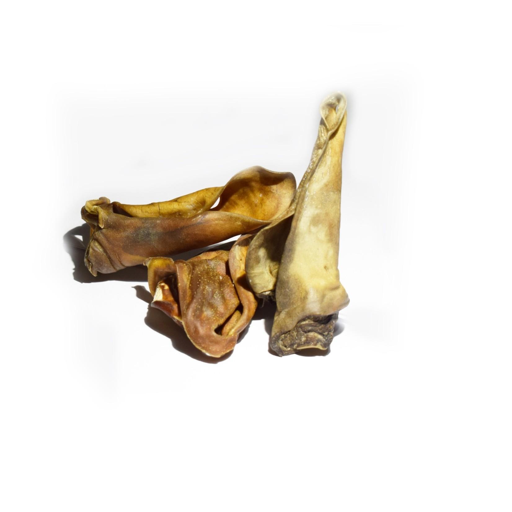 Kamelen oren