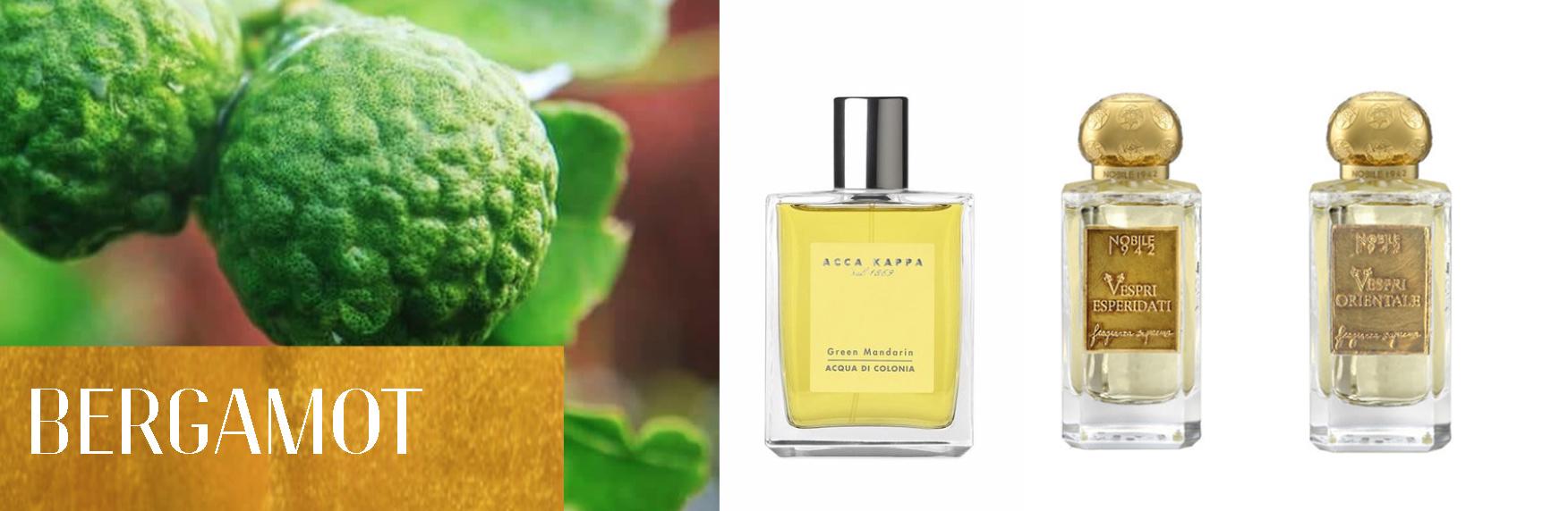 Perfume Ingredients: Bergamot