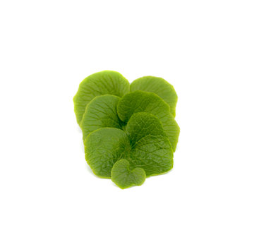 Dutch Wasabi Dutch Wasabi® Leaves