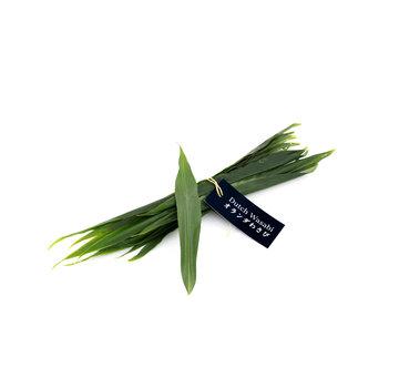 Dutch Wasabi Fresh ginger leaf 15pcs