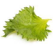 Japan Shiso Leaves Green 20 pc