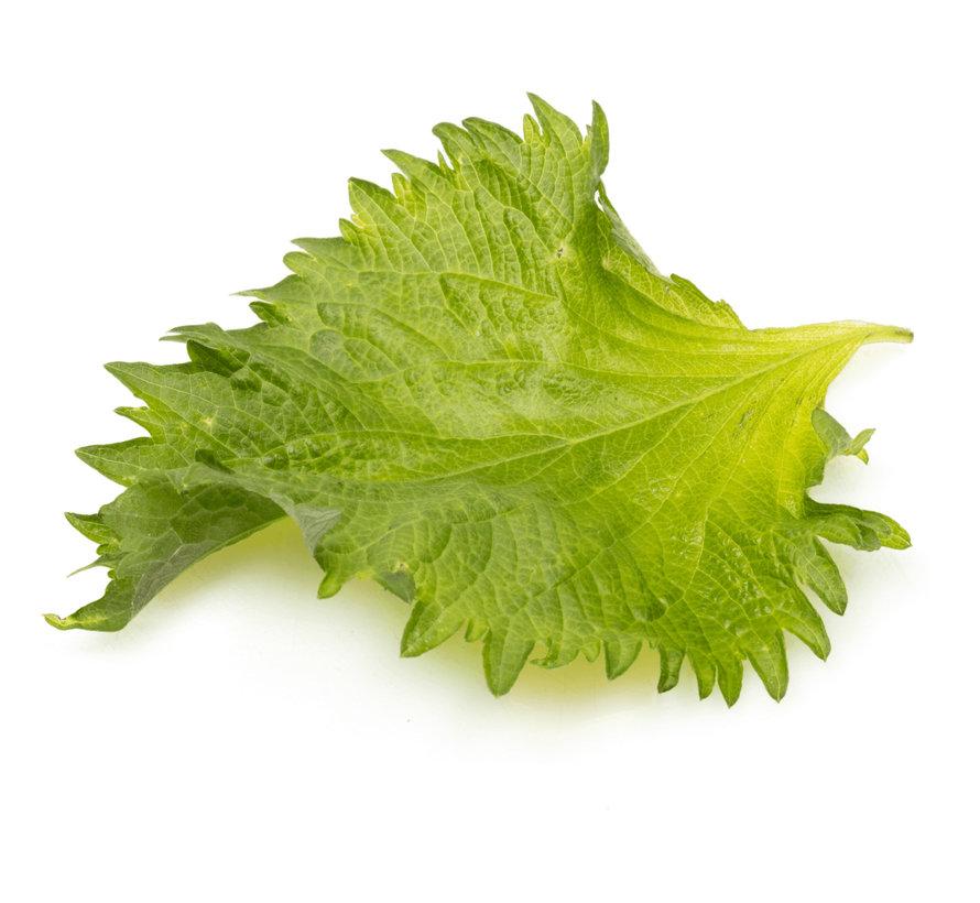 Shiso Leaves Green 20 pc
