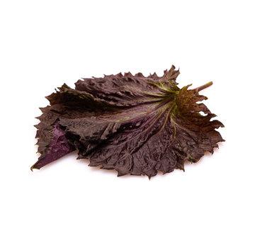Dutch Wasabi Purple Shiso Leaves 20 pc