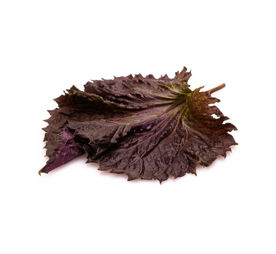 Purple Shiso Leaves 20 pc