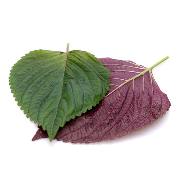 Japan Perilla Leaves bi-color 20 pc