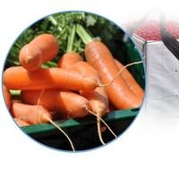 Fruits & vegetable plastic crates • pallet boxes