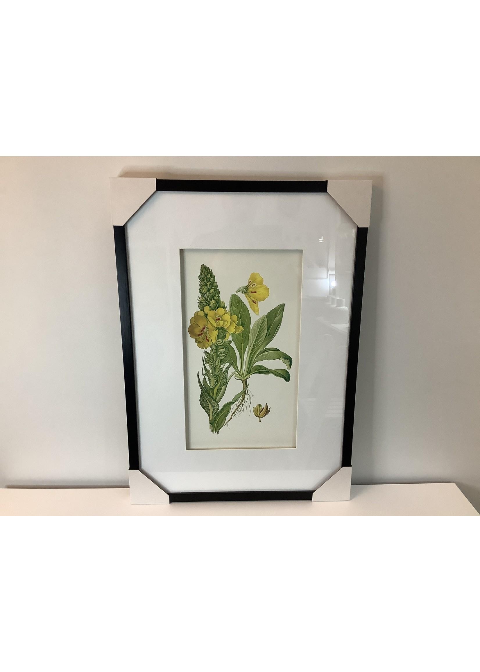 Botanical Framed Print 70x50cm