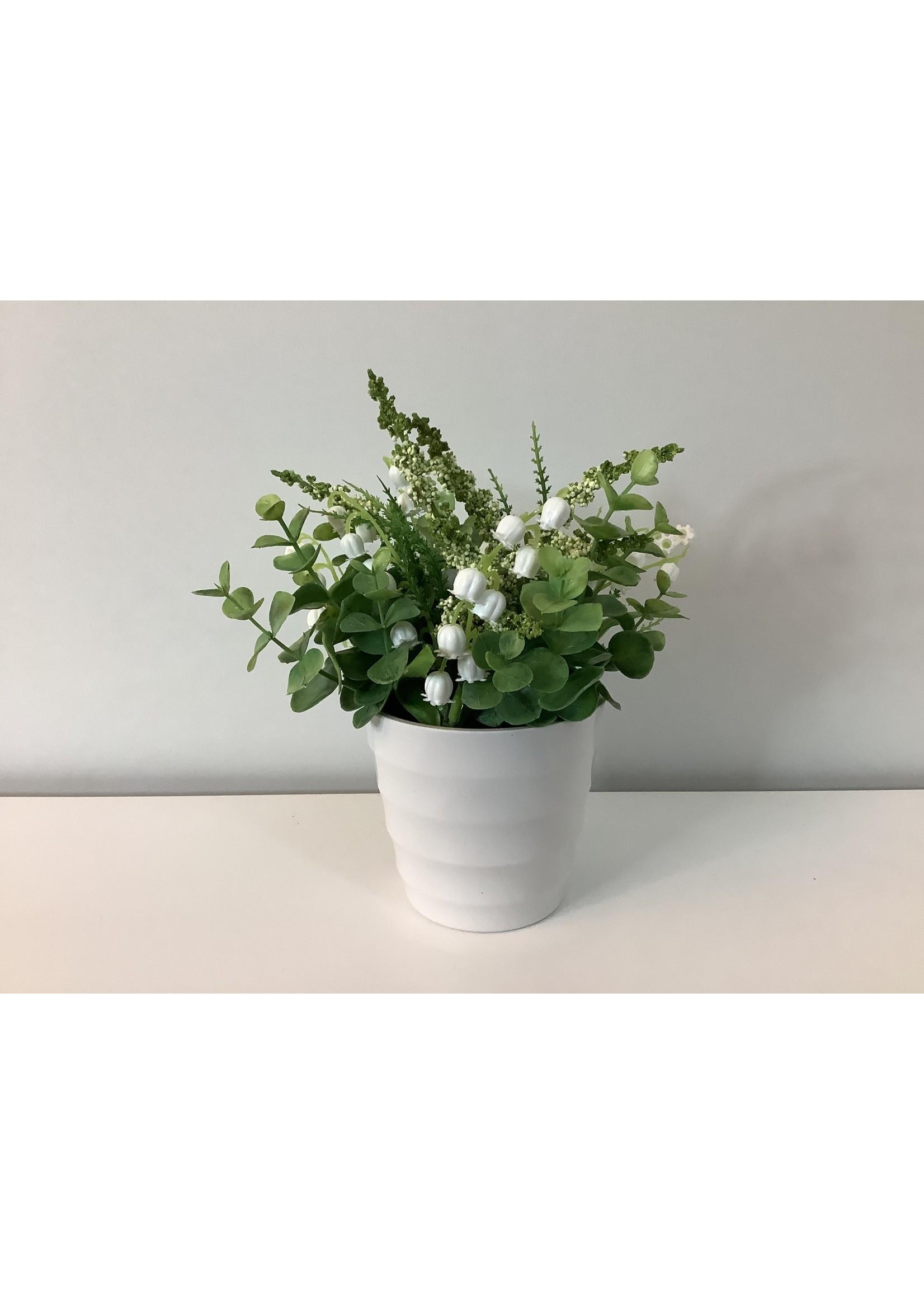 Snowdrops in vase 20cm