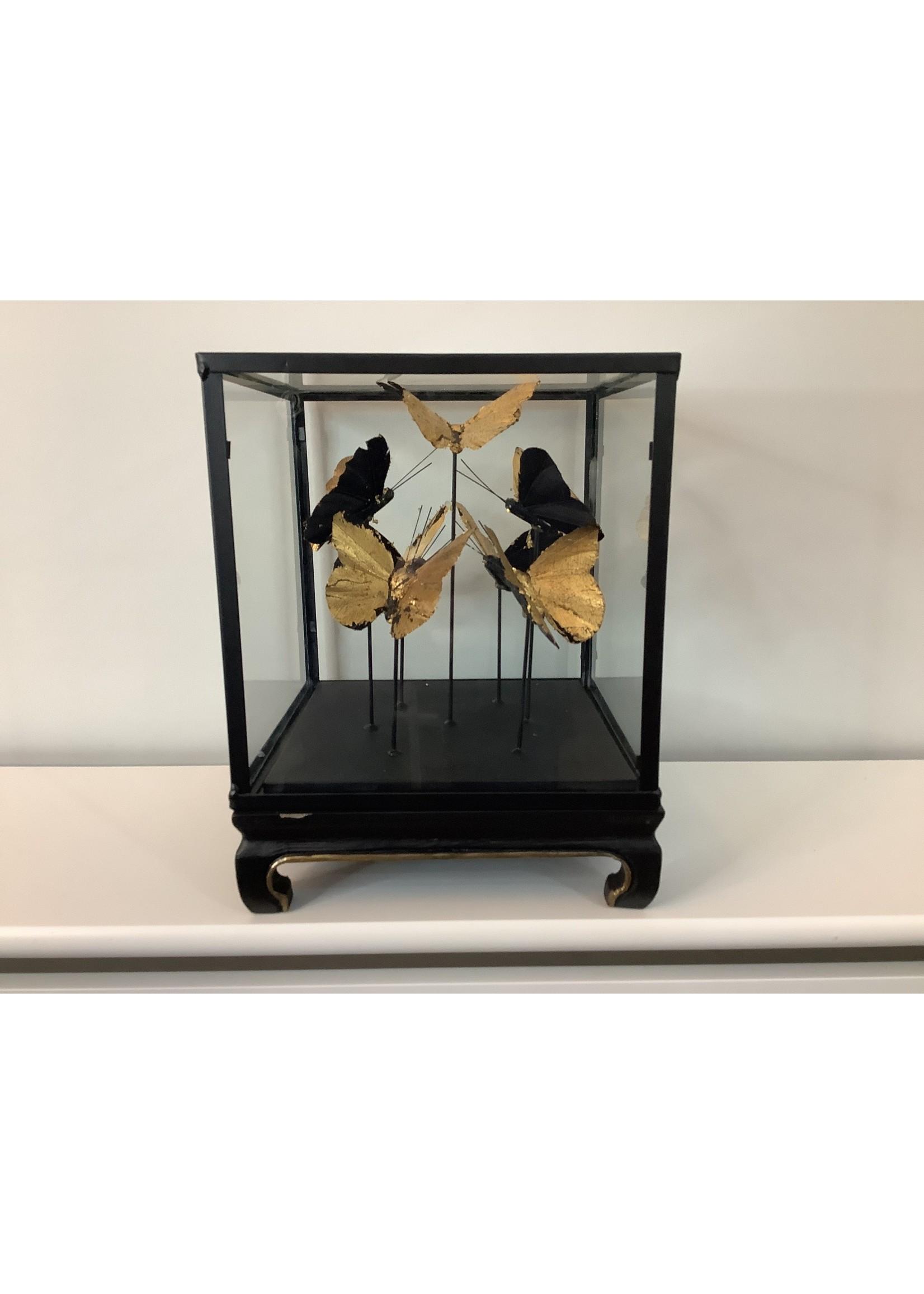 Butterflies in glass display case 18x18cm