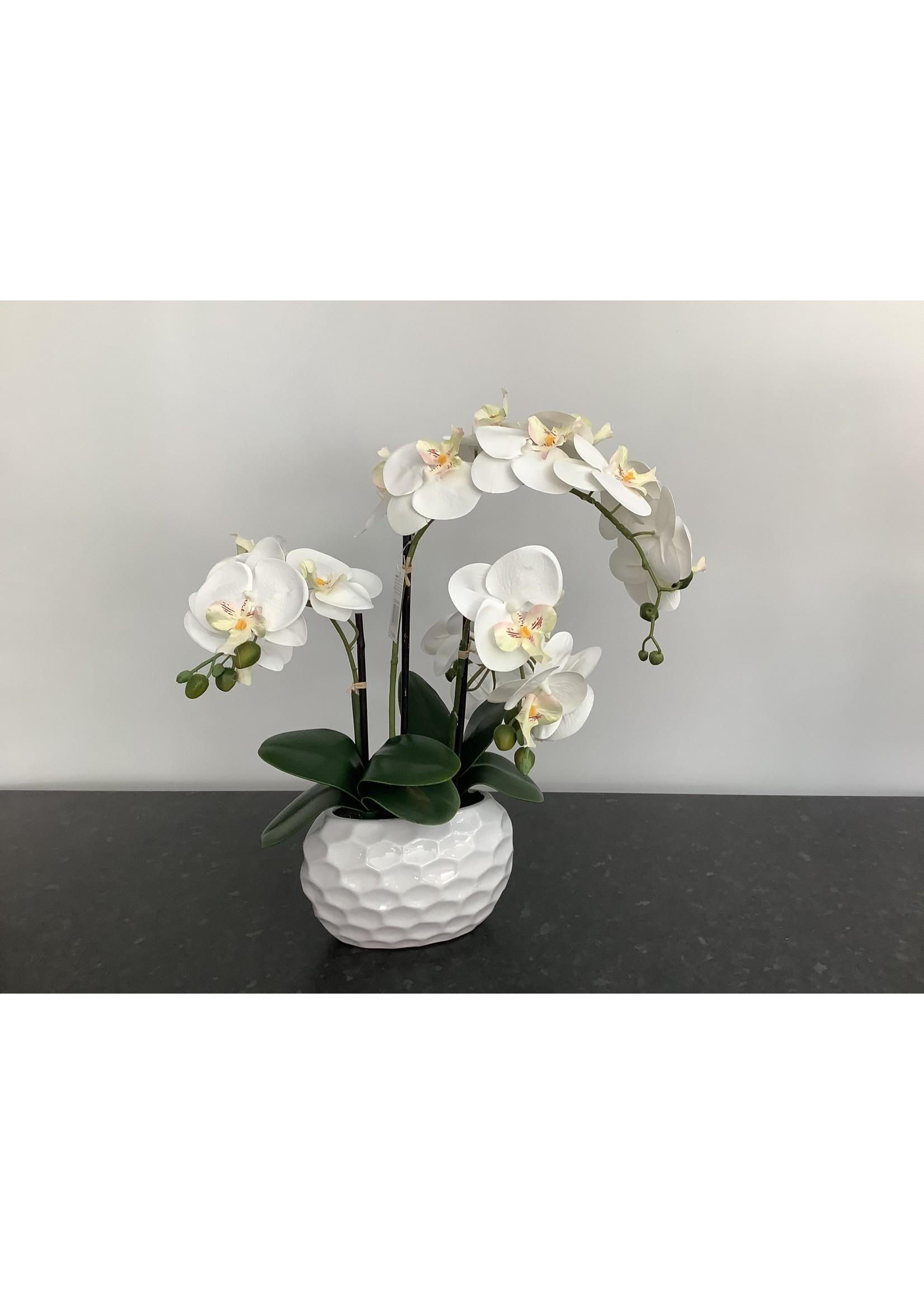 Orchid Phalaenopsis Dimpled Pot 53cm