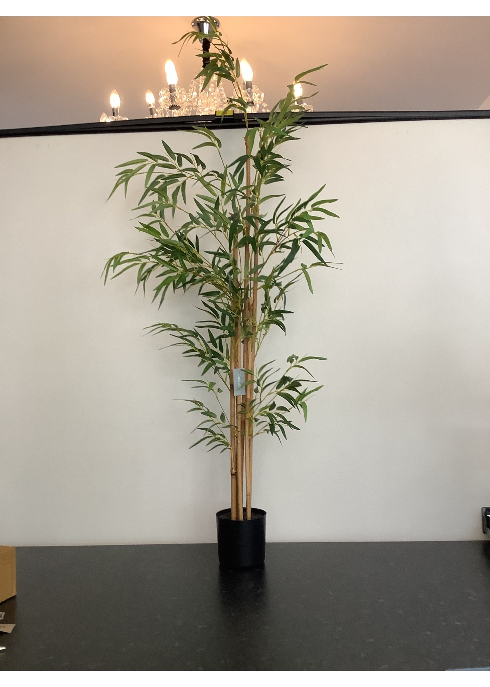 bamboo Potted 532l 135cm