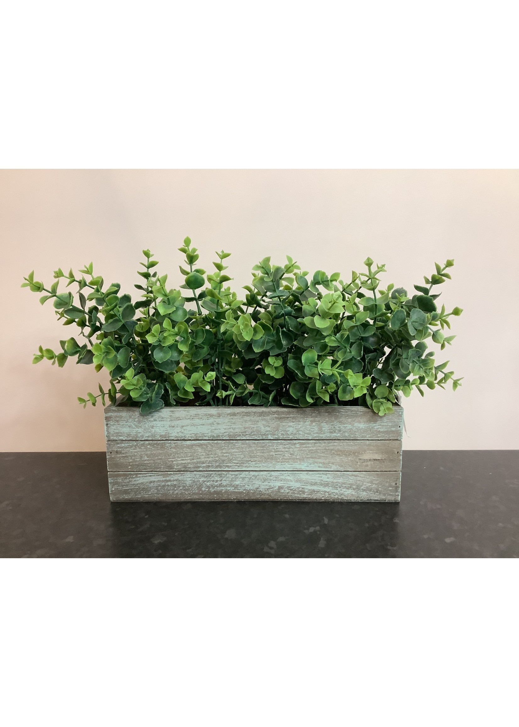 Eucalyptus in wooden box 30x25cm