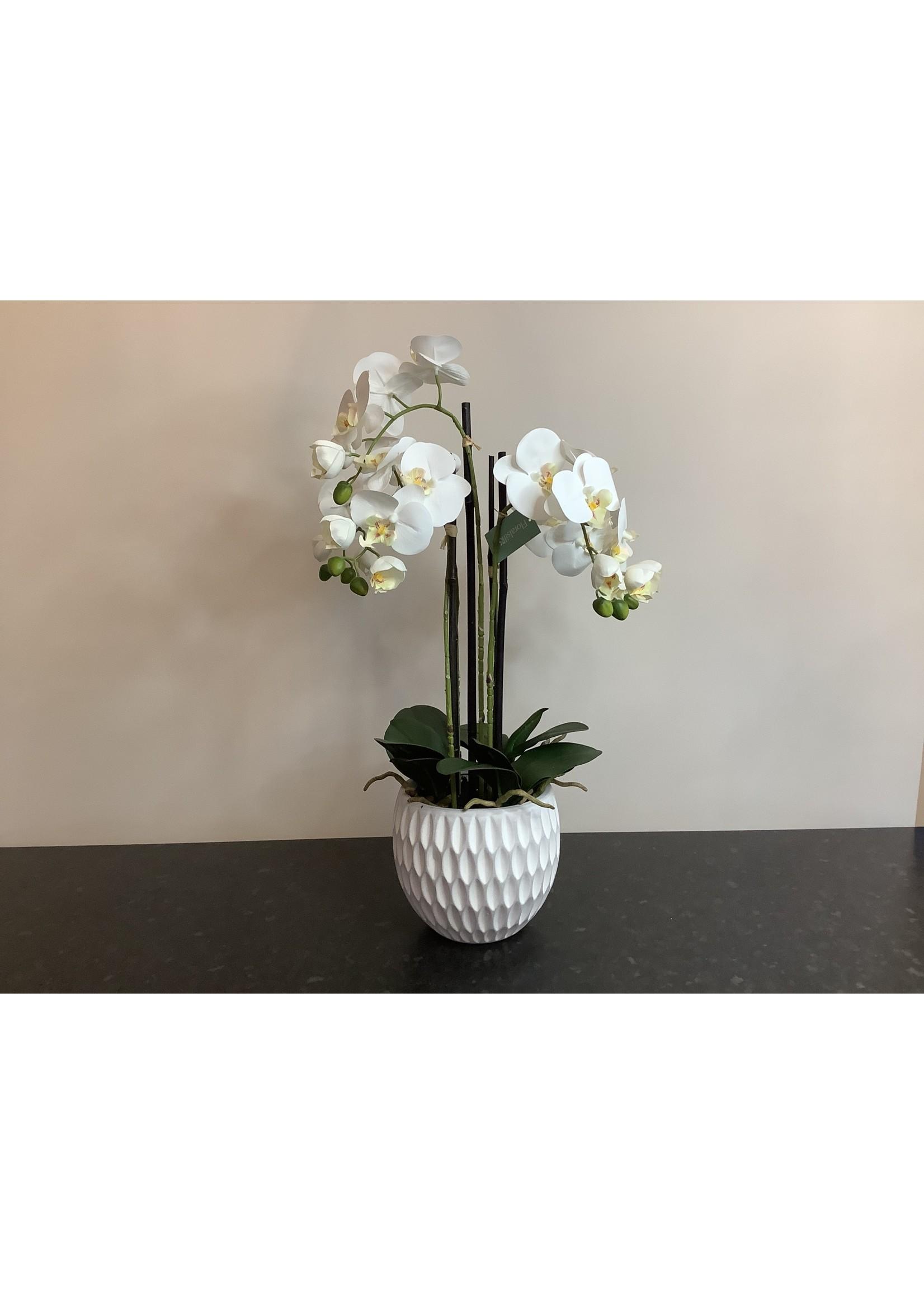 Large Orchid arrangement 65cm x 20cm