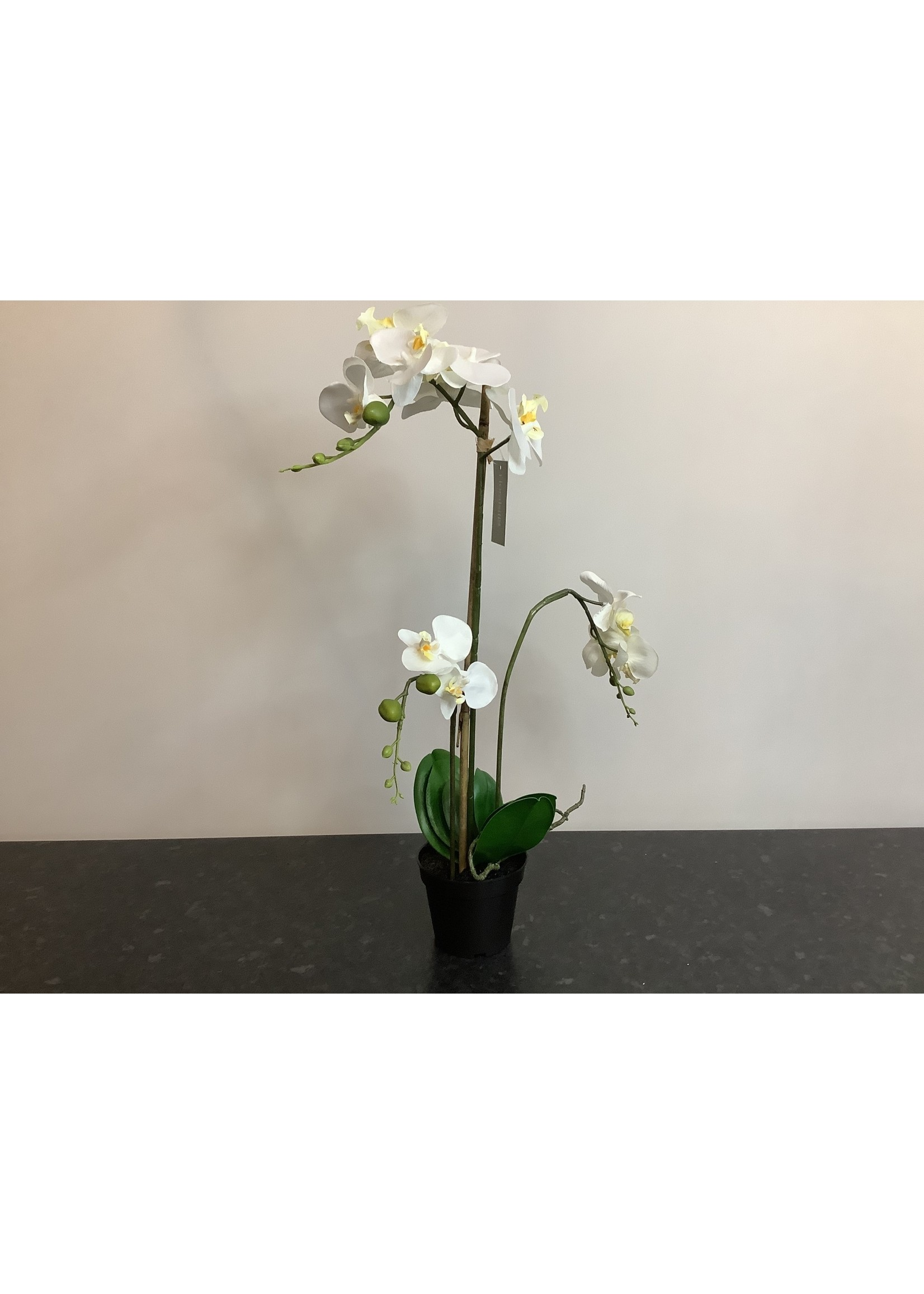 Orchid arrangement 55cm tall