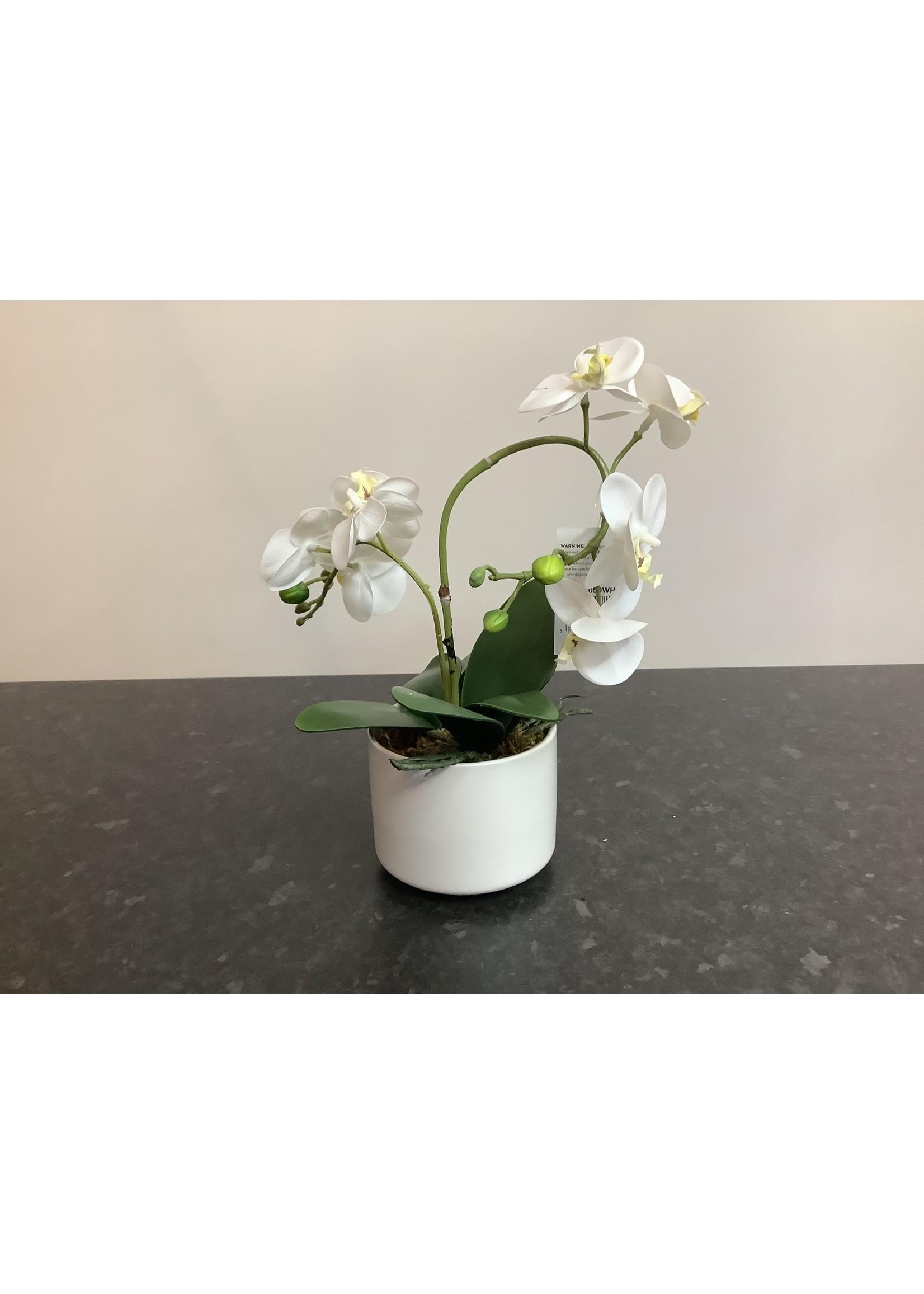 Small orchid arrangement 26cm tall