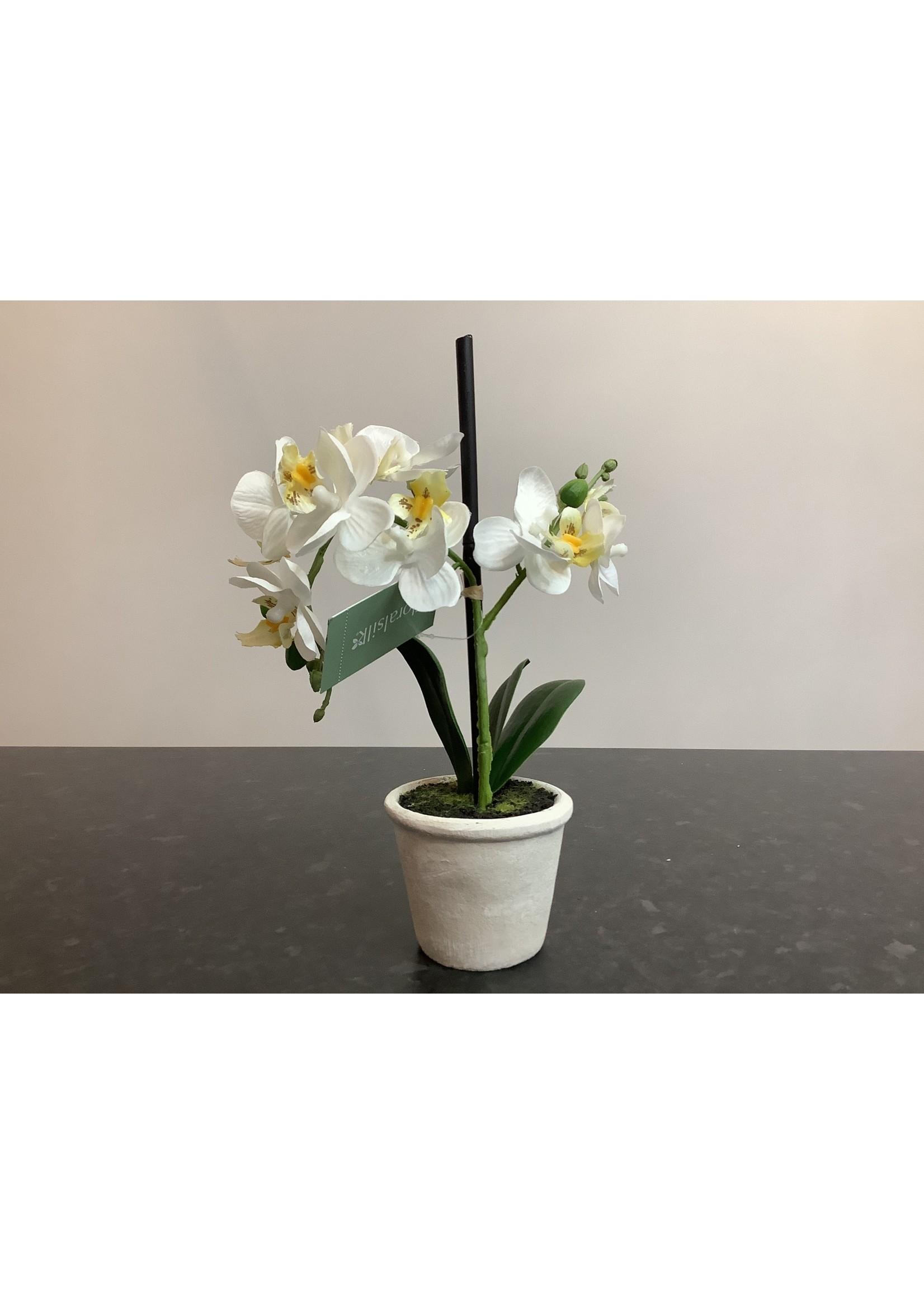 Small orchid arrangement 30cm tall