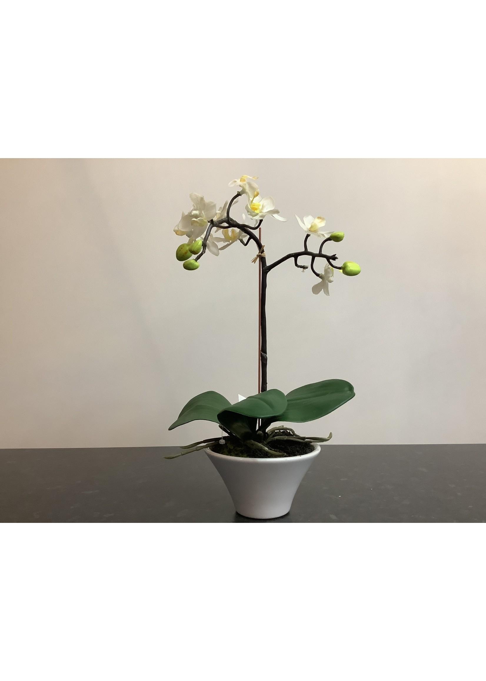 Small orchid arrangement 33cm