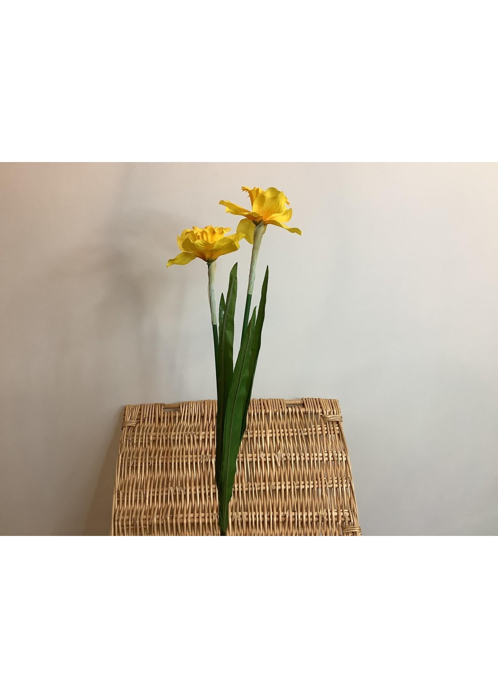 Daffodil 2 heads