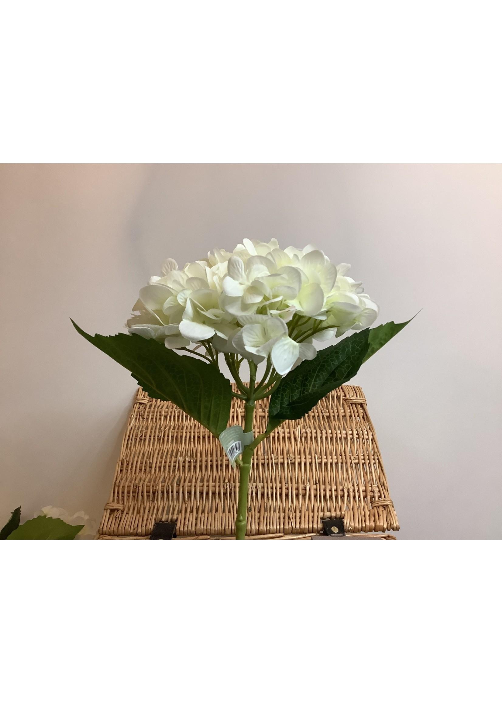 Hydrangea white short stem