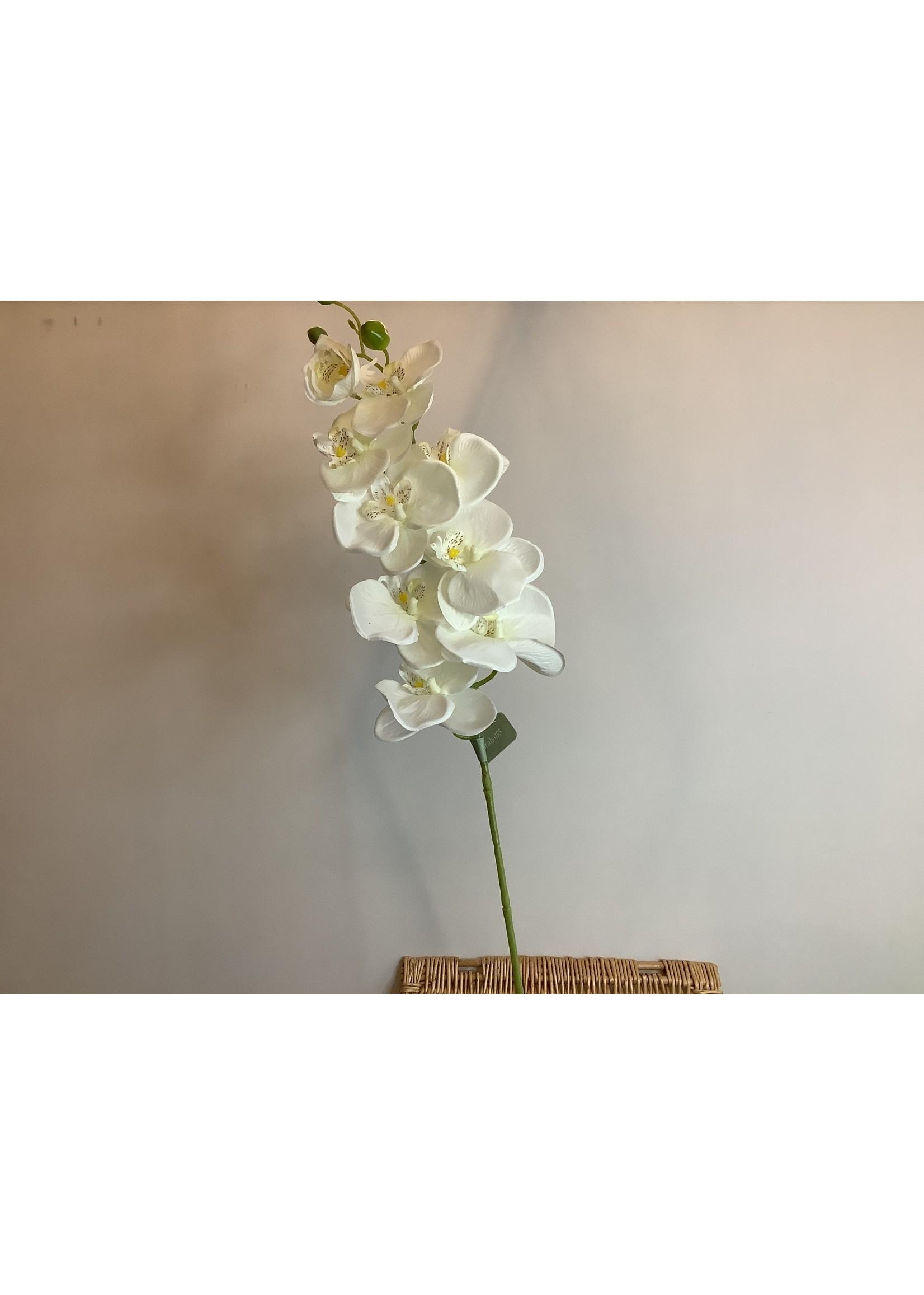 Orchid Phalaenopsis long stem 98cm
