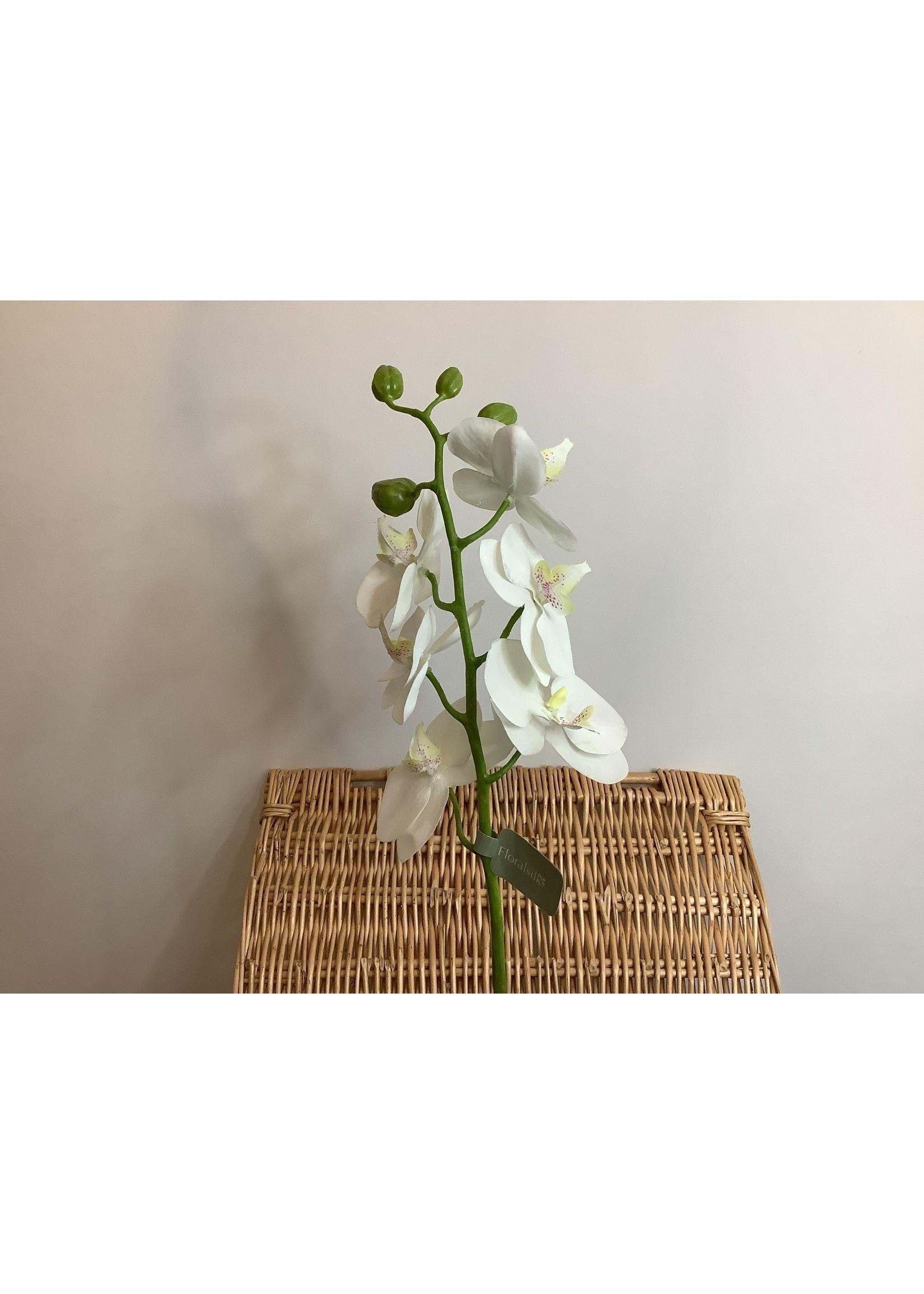 Phalaenopsis Orchid 58cm