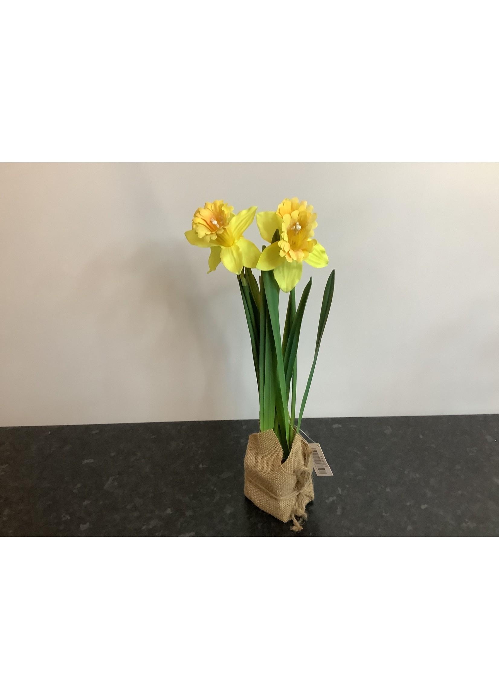 Daffodil in hessian block yellow