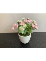 Ranunculus in Round Pot Pink 28cm