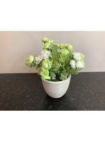 Ranunculus in Round Pot Green 28cm