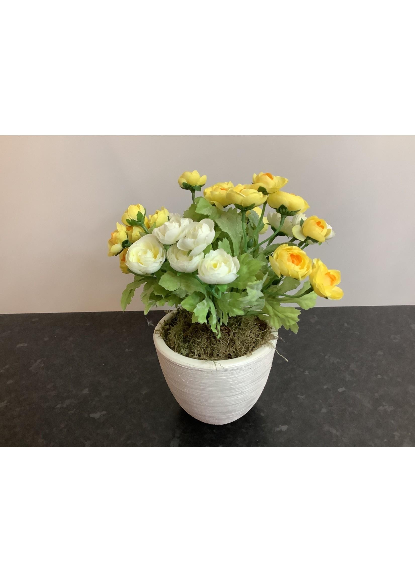 Ranunculus in Round Pot Yellow 28cm