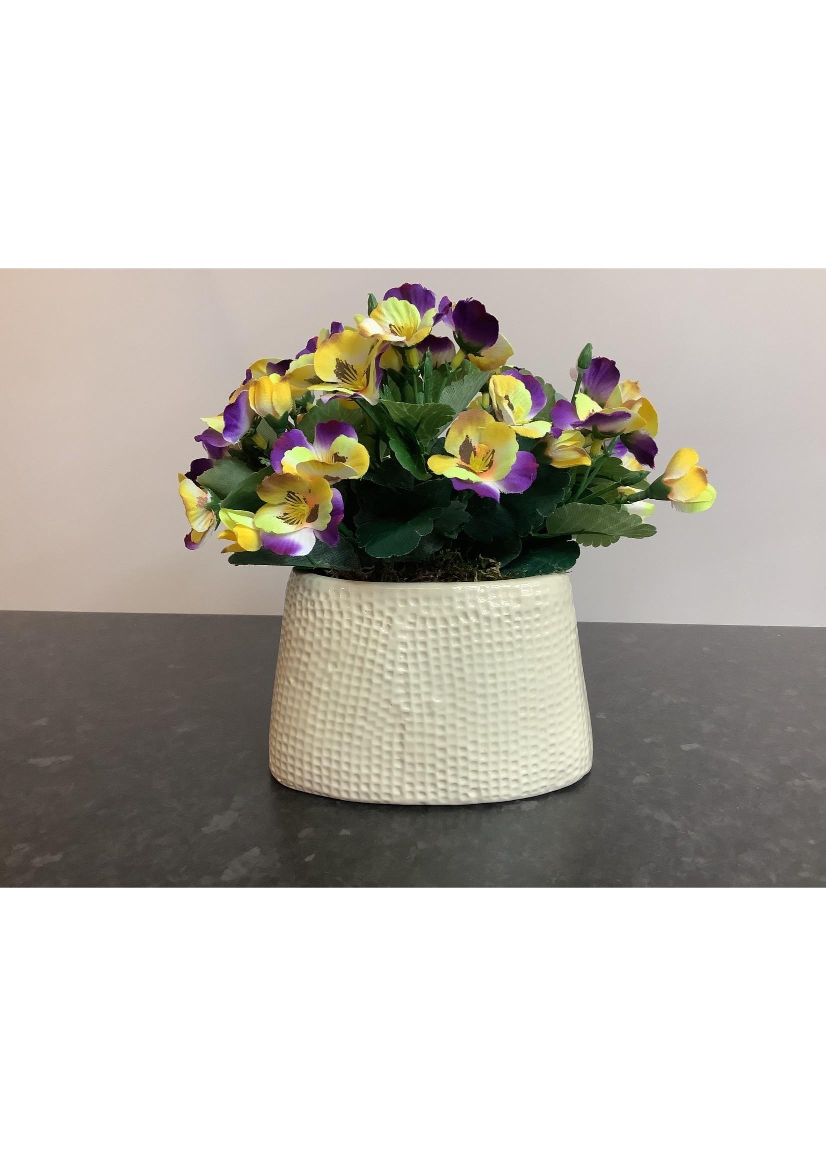 Pansies in Ceramic Pot multicolour 16x20cm
