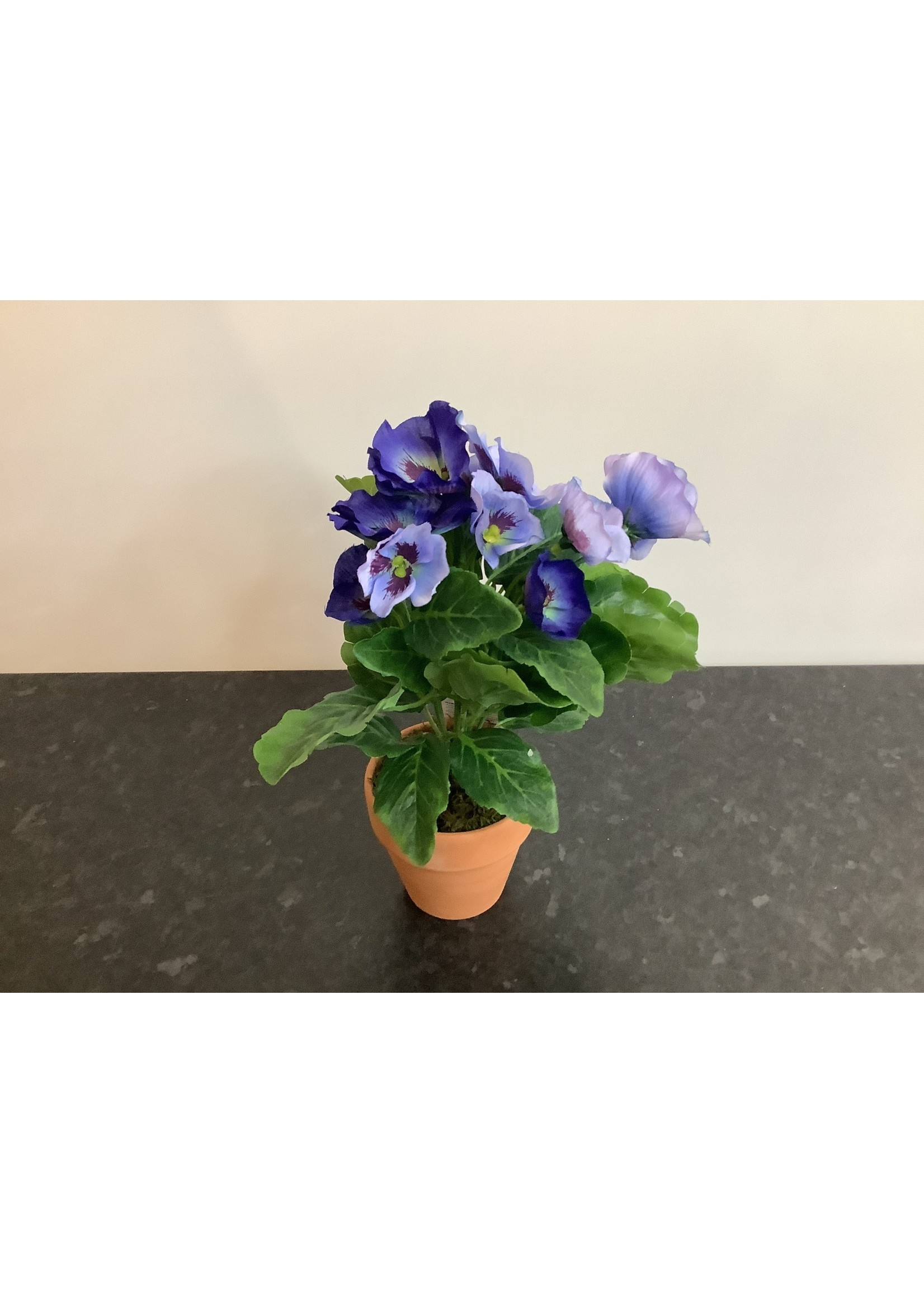 Potted  Pansy Blue 25cm